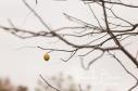 Last remaining walnut